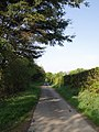 Lane alongside Raddon Brake - geograph.org.uk - 430660.jpg