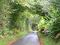 Lane through autumnal woods - geograph.org.uk - 1006032.jpg