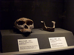 Lantian Man skull and jaw.jpg