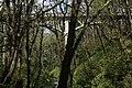 Latourell Creek Bridge (11446904143).jpg