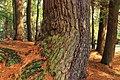 Laurel Run Trail (12) (13208193924).jpg