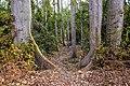 Layon 12 dans la forêt de la Lama au Bénin.jpg