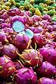 Le Pitaya, Le Fruit du Dragon.jpg
