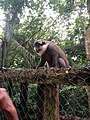 Le singe.jpg