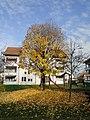 Leimen November 2012 - panoramio (12).jpg