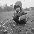 Lente nadert, crocussen bloeien in de perken te Amsterdam, Bestanddeelnr 912-0841.jpg