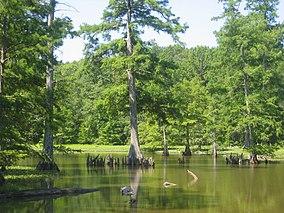 Leroy Percy State Park.jpg