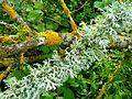 Lichens 06 2016.jpg