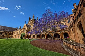 University of Sydney Quadrangle - The Jacaranda tree in the quadrangle in full bloom. Philosophy classes were held in the rooms behind it.