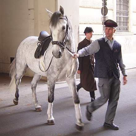 Lipizzan horses, like this one in Vienna, were used for chariot teams in Ben-Hur. Lipizzaner DSC02450.jpg