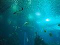 Lisbon Oceanarium (14402140522).jpg