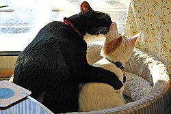 b38efd75464d Οι γάτες μπορεί να αναπτύξουν φιλικές σχέσεις με άλλες γάτες. Στη  φωτογραφία