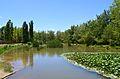 Llacuna del parc de la Rambleta de València.JPG