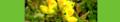 Lotus corniculatus. Reader-2.png