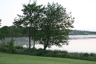 Lough Gowna - Image: Lough Gowna pre dawn (235490009)