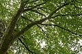 Münster, Park Sentmaring -- 2018 -- 0004.jpg