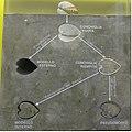 MI civico museo scienze naturali (5) schema di fossilizzazioni.jpg