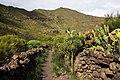 Macizo de Teno, Tenerife 05.jpg