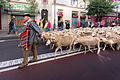 Madrid - XX fiesta de la trashumancia - 131006 105318.jpg