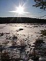 Maine bog with deer tracks.JPG
