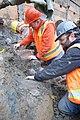 Mammoth bones found at OSU expansion of Valley Football Center - DSC 0434 - 24022805113.jpg