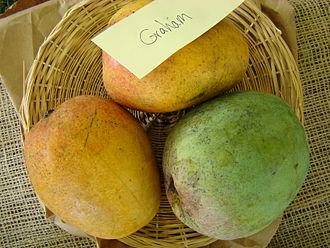 Graham (mango) - Image: Mango Graham Asit fs 8