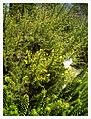 March Spring Botanischer Garten Freiburg - Master Botany Photography 2013 - panoramio (112).jpg