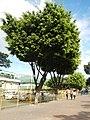 MarikinaCityjf8905 36.JPG