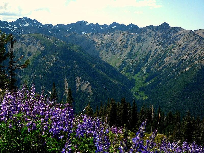 800px-marmot_pass2c_olympic_national_park