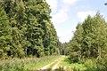 Meža ceļš, Olaines pagasts, Olaines novads, Latvia - panoramio.jpg