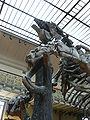 Megatherium americanum down.JPG