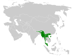 Melanochlora sultanea distribution map.png