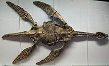Das angebliche Monster von Lochness 220px-Meyerasaurus_victor_SMNS_12478