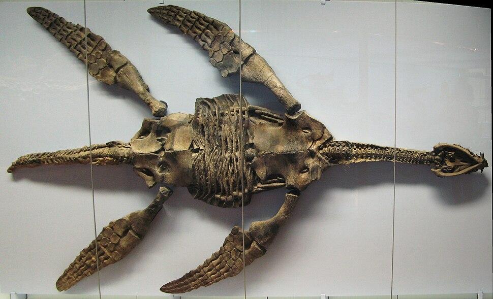 Meyerasaurus victor SMNS 12478