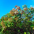 Miami Beach - Sand Dune Flora - Green Bushes and Plants 06.jpg