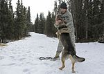Military working dogs sharpen their skills at JBER 160317-F-YH552-044.jpg