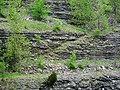 Minor thrust fault in limestone-shale (Upper Ordovician; Maysville West upper roadcut, Kentucky, USA) 3.jpg