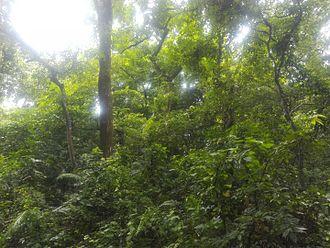 Madhupur Upazila - Image: Modhupur forest