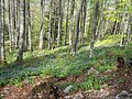 Mont Sacon jacinthe des Pyrénées.jpg