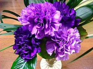 Dianthus caryophyllus - Moondust carnations