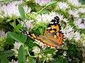 Motýl z Humpolecka - A.JPG