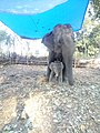 Mother baby elephant.jpg