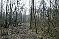 Motte op de Butsberg te Tielt-Winge - 372494 - onroerenderfgoed.jpg