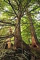 Mount Logan Natural Area (Revisited) (4) (9779140724).jpg