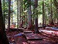 Mount Revelstoke National Park 02.jpg