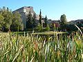 Mount Royal University from across the pond.jpg