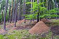 Mravenistě, Hlinecký les, Hřešihlavská.jpg
