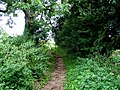 Muddy footpath - geograph.org.uk - 224720.jpg