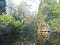 Mullica River.jpg