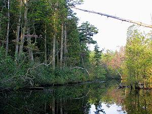 Mullica River - Mullica River